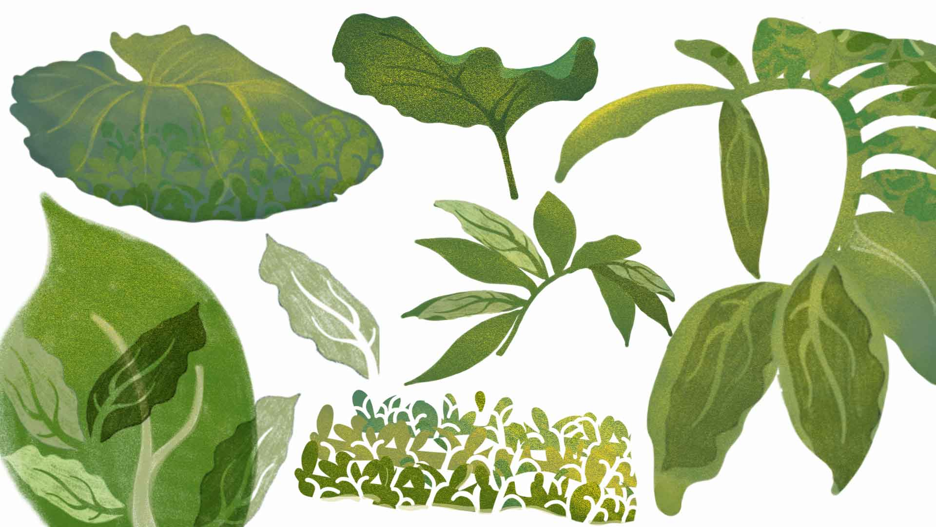 Green plant study