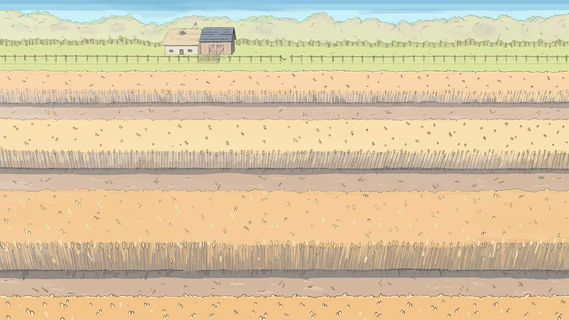 illustration of rows of wheat in a field